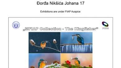 Photo of Petar Sabol: MFIAP Collection – The Kingfisher